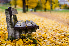 Autumn Bokeh photo by torbus