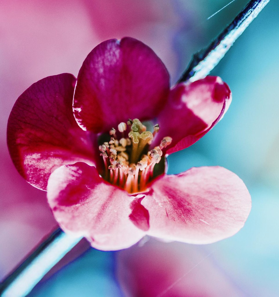~ blossom de flickr ~ photo by Janey Kay