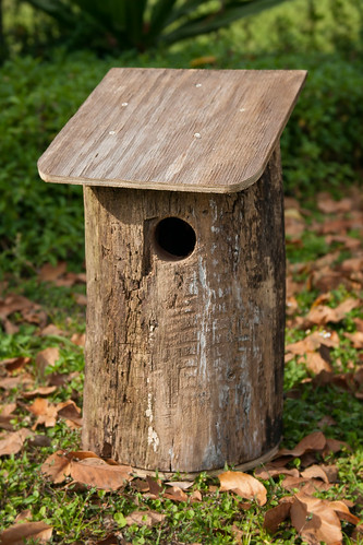 Log Bird Home