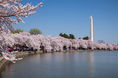 Le printemps à Washington