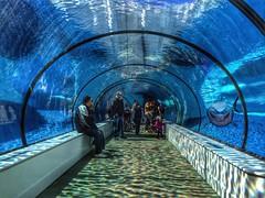Detroit's Arctic under water aquarium. photo by tweetybird42766