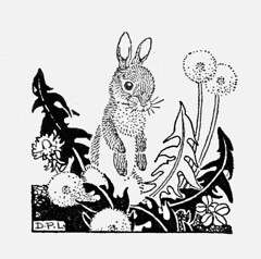 Rabbits photo by katinthecupboard
