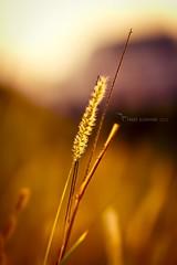 Interest photo by Tarqe alzharani || ******