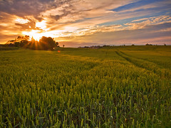 Wheat Sunset photo by Alan10eden