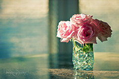 Rose & Teal photo by Tess Sartin