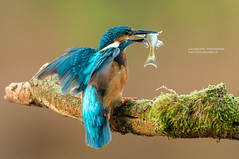 Catch of the day photo by Luuk Belgers