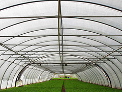 Greenhouse Tunnel photo by Batikart