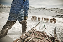 Dog sled driver and dogs photo by greenland_com