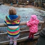 Watching the sea lion show<br/>14 Dec 2013