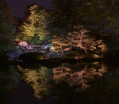 Jardin de lumière photo by monilague