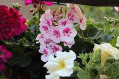 Random Flowers photo by Corazón de Mimbre_