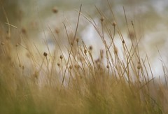 Grasses at the Cliff Edge photo by 1963chris