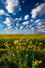 Harvest Time photo by Phil~Koch