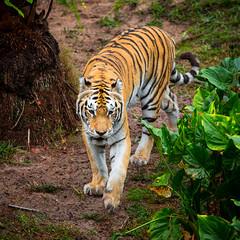 Animal Kingdom - On the Prowl photo by SpreadTheMagic
