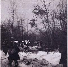 13 DBLE- 1945 3e Ble dans les bois d'Elsenheim