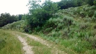 Where the road meets the di trail