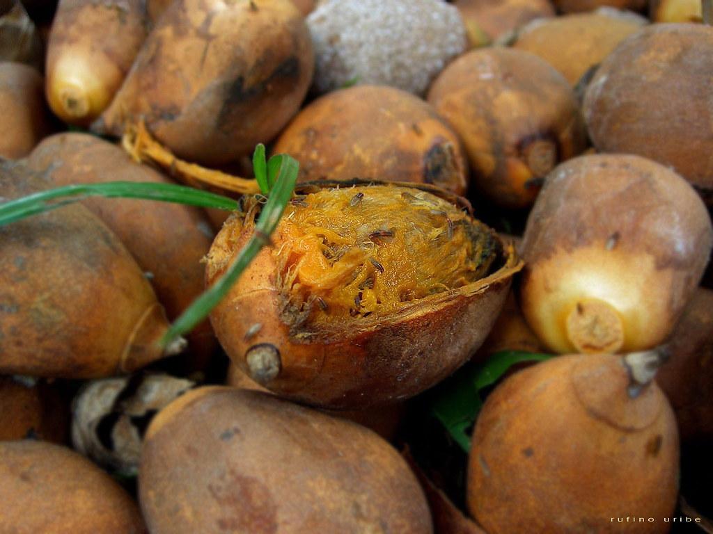 Comment Eliminer Les Moucherons Des Fruits bug's war 1 : drosophiles - raffa ::: le grand ménage :::