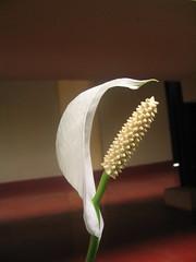 Snake or flower