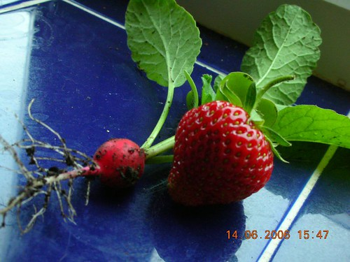 first fruits!