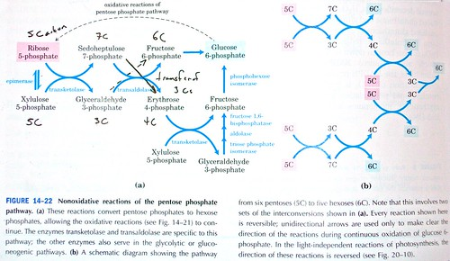 Figure 14-22 from Lehninger's Biochemistry, 4th Ed.