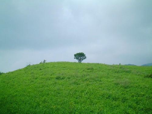 ★湯ノ沢峠の草原とヤマオダマキ