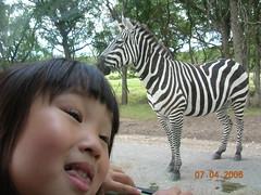 我和这个斑马,谁美?