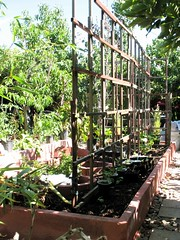 Vegetable Bed with Trellises