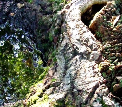 punkwater tree 2