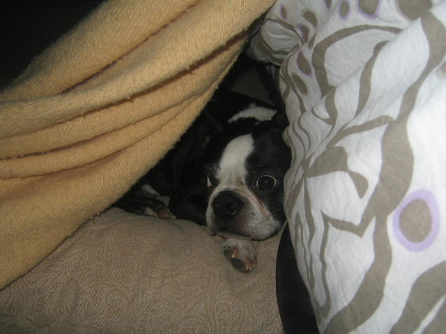 Joey in his blanket cave