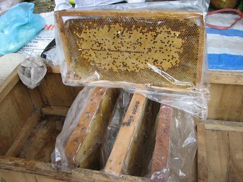 Honey - Tam Dao