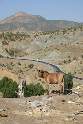 Donkey and horse near Bitlis, Turkey.