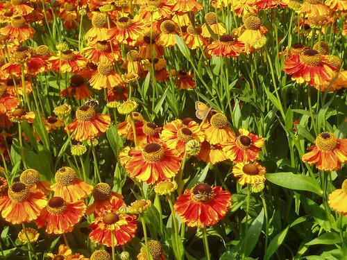 flowerswithbeesnbutterflies