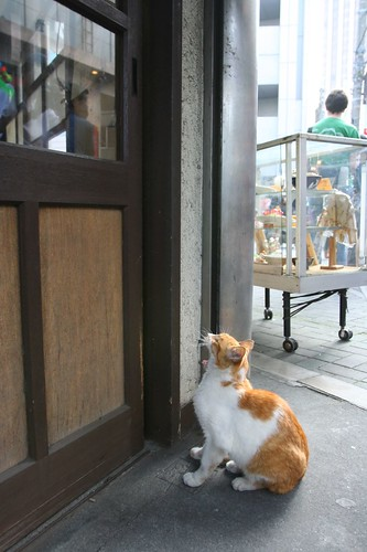 A cat living in Asakusa