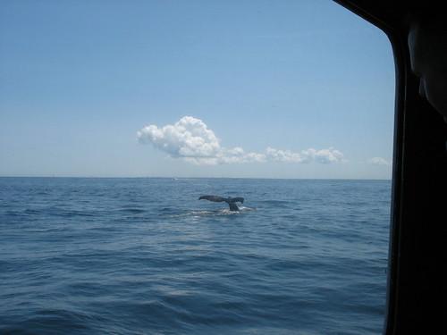 whale six