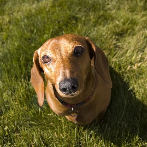 Doggie torpedo