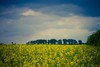 Rape Field photo by icemanphotos