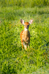 Bambi  (One more shot in comments) photo by Bill Varney
