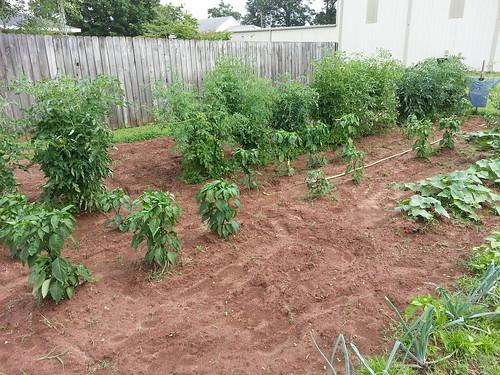 Our Garden (June 2013)