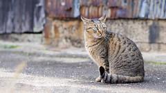 Straycat struttin' in Shimonoseki photo by Eric Flexyourhead