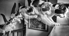 Flying cat photo by Matt Bigwood