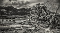 Kick It Root Down, Squamish Terminals, BC, Canada photo by jpcastonguay