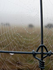 The Fog, the Fence, the Web and the Buffalo photo by Universal Pops (David)