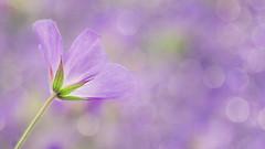 Floral design photo by TouTouke - Nightfox