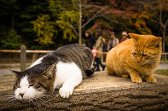 """""""..what has happened, boss?"""" (Kyoto) photo by Marser"""