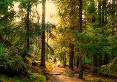Woodland Path photo by Bathsheba 1