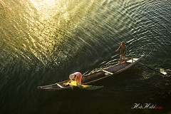 Bắt vàng - Gold catching - Explored photo by Ha Hai