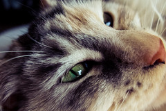 The Cat's Eye photo by Nicholas Erwin