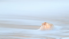 Seashell photo by Bill'sLIPhotos