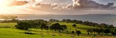 Golden Vista photo by Peter Knott