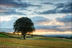 Lone Tree Sunrise photo by Martyn.Smith.